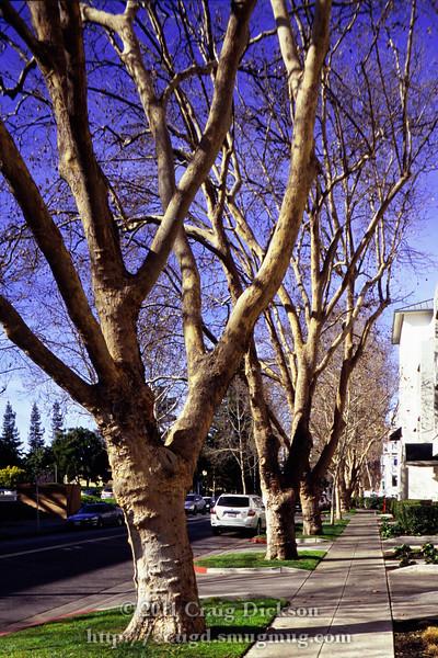 High School Way near Castro St., Mountain View, California