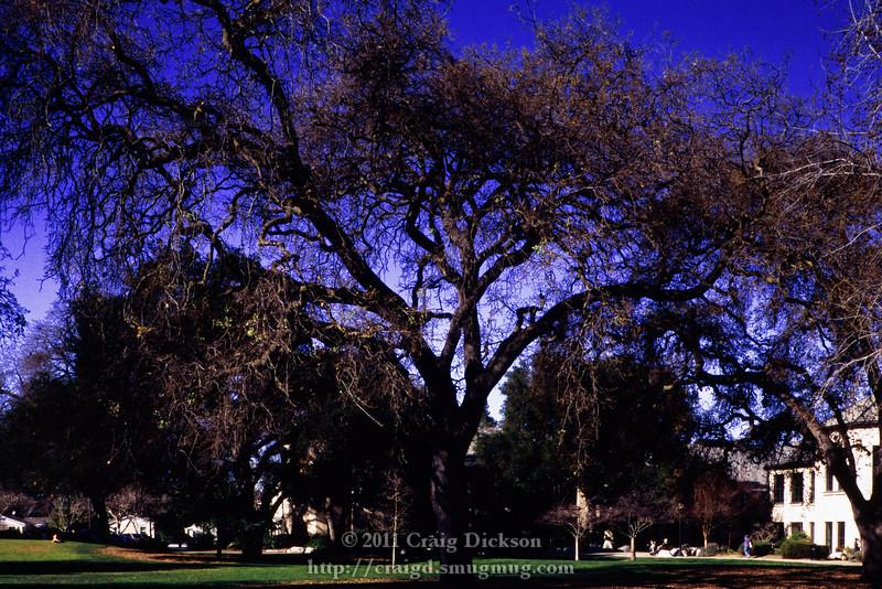Park, Mountain View, California