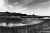 Bird pond