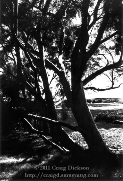Chiaroscuro trees