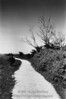 Path with bare trees