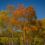 2012-09-14 Fall Color_0058 (Adjusted)