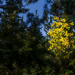 2012-09-14 Fall Color_0009 (Adjusted)