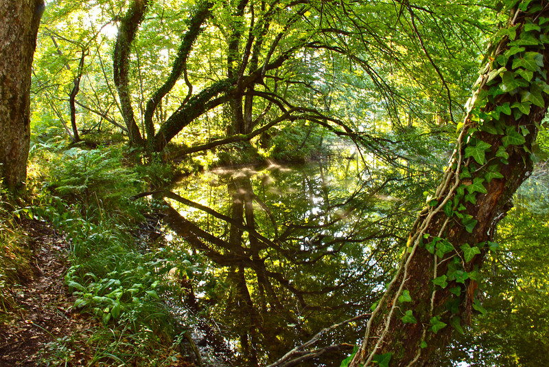 Trees reflected, Plitvice
