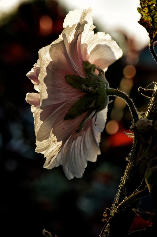 Kaikoura_2012-01-20_18-57-53__DSC8737_©RichardLaing(2011)