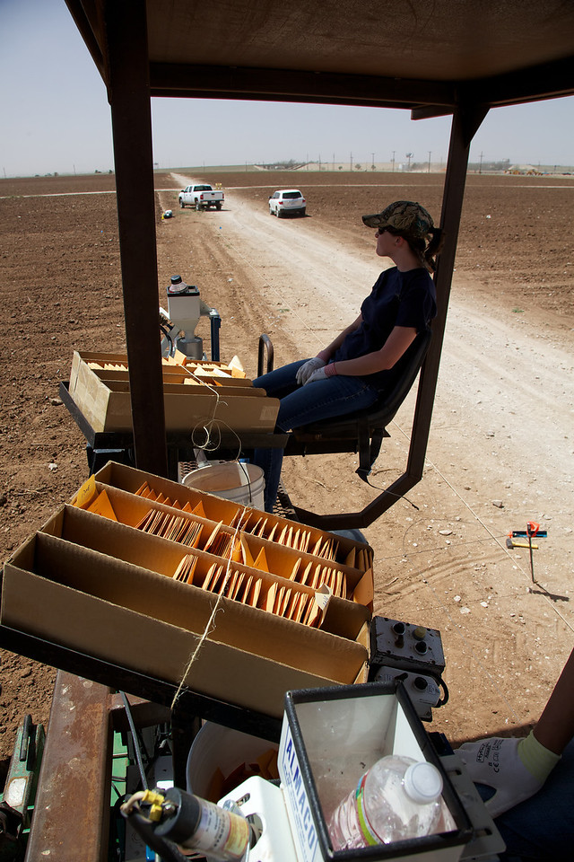 Taking a break at the end of a field, 2013. The woman in the photo puts small packets of corn seed into the corn planter. Her job is to get the right seed into the right plot. This takes a lot of concentration and a rest at the end of the field is perfectly justified. There is a small post in the ground to the right in the photo. This holds a steel cable that has trip knobs every 20 feet. The knobs tell the planter to drop another packet of seed. Our fields are in excess of 700 feet long so people have to move this long steel cable over several rows after each planting pass.
