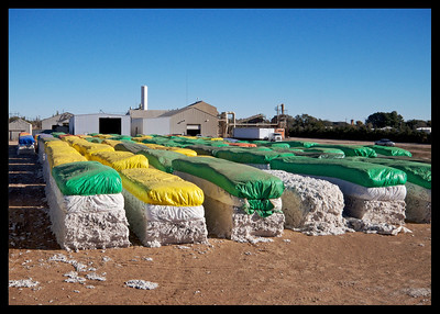 Cotton modules waiting to be ginned, Ropesville, Texas 2015.