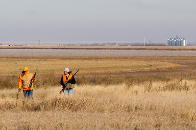 Pheasant hunting: Walking the miles of fields in the Panhandle, 2015.
