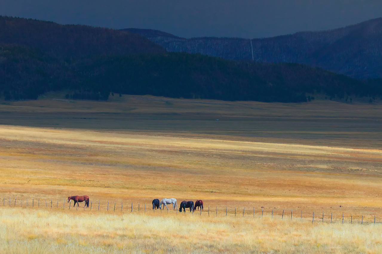 """Valles Caldera National Preserve, New Mexico, Sept. 2012. A storm is approaching in the background (looking east) with the afternoon sun behind the camera. Valles Caldera website: <a href=""""http://www.vallescaldera.gov"""">http://www.vallescaldera.gov</a> ."""