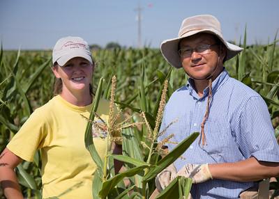 Corn breeders take a break from cross pollinating ears.