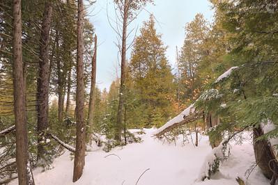 2013-01-20-109107-3 Woods