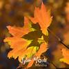 10  Fall