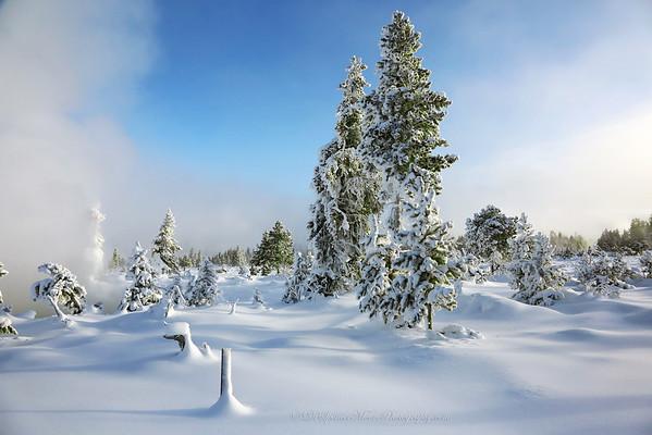 Yellowstone Winter 2013