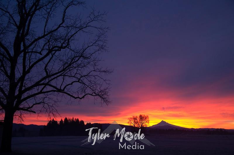 1  January, Sunrise Over Mt  Hood