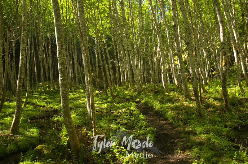 4  April, The Lava Canyon Trail