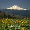 6  June, Mt  Hood and Balsam Root