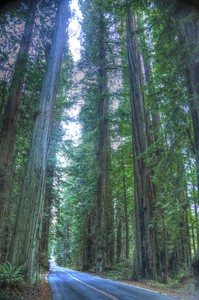 Avenue of the Giants  _MG_0840_1_2_tonemapped