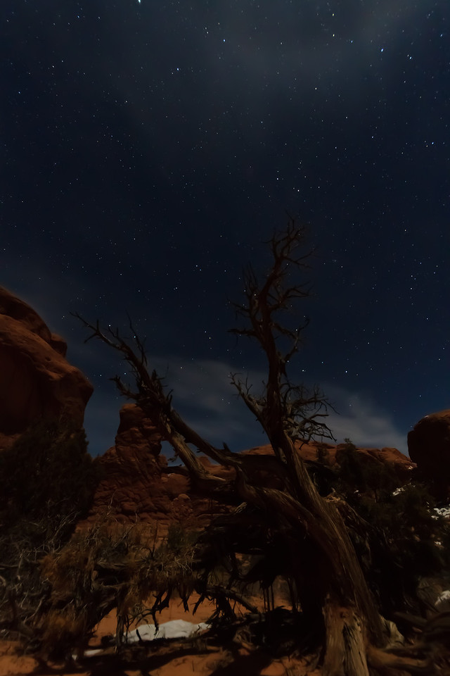 A Bristlecone Pine in Arches National Park, Moab UT under moonlight.<br /> <br /> With a half-moon about an hour after sunset, there was enough moonlight to illuminate the foreground under a soft glow while still allowing the stars to shine through.  It was an amazing night to take photos.