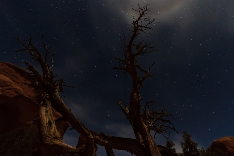 """Spooky Tree""<br /> <br /> A Bristlecone Pine in Arches National Park, Moab UT under moonlight.<br /> <br /> With a half-moon about an hour after sunset, there was enough moonlight to illuminate the foreground under a soft glow while still allowing the stars to shine through.  It was an amazing night to take photos."