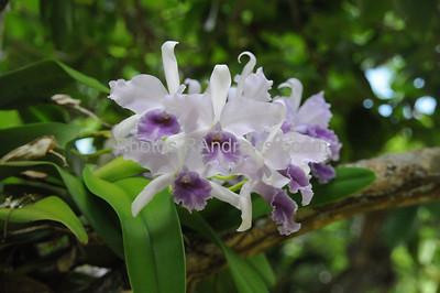 Orchids at McBryde Garden at National Tropical Botanical Garden