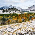 """""""Snow and Fall Colors in the Eastern Sierra"""" Near Yosemite National Park and Mono Lake, California. I captured this image a few years ago just after a first snowfall with the fall colors. It started out around 90 degrees and quickly changed within a few days to get this crisp snowfall. This is located in Inyo National Forest in the Eastern Sierras outside Lee Vining. This image spoke to me as I saw the curves along the colorful treeline and the layers of hills and mountains in the background. The light dusting of snow offsets the colorful fall colors in the Aspens and pines. Don't forget to eat at the Whoa Nellie Deli for some of the most amazing food after a day of shooting! — at Yosemite National Park.  Fine Art Images for Collectors, Healthcare and Corporations.  Perfect for Executive Briefing Centers.  More images from Yosemite National Park can be seen here:  <a href=""""http://bit.ly/1hDQ1ee"""">http://bit.ly/1hDQ1ee</a>"""