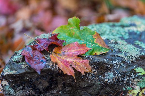 Photos taken during a Tim Ernst Fall Color Workshop in October 2015.