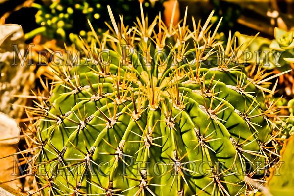 California Botanic Garden