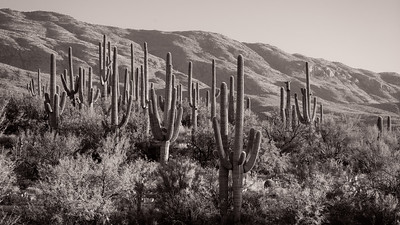 Tanque Verde Ranch 2016 BW