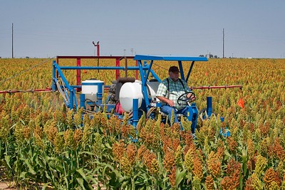 Spider sprayer treating a 4-row sorghum plot for sugarcane aphid control. Muleshoe, Texas.