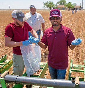 Planting a cotton seed treatment trial, 2018.