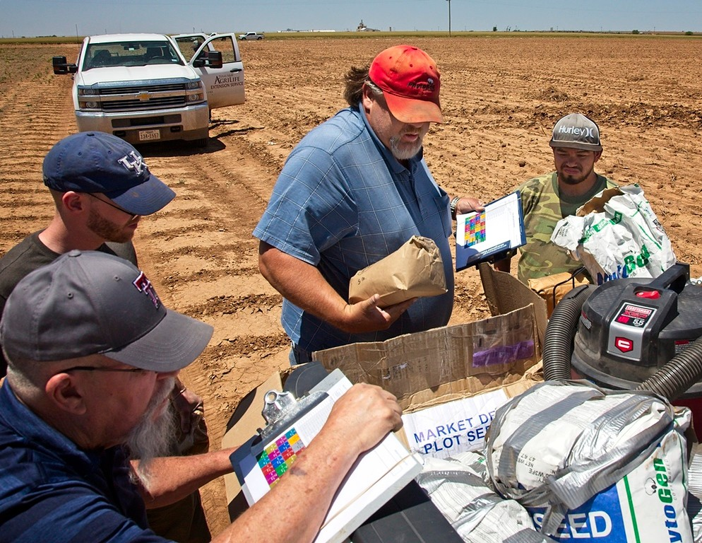 Sorting out the cotton seeds in the seed treatment trial, 5/18/17. There is a lot to keep track of. The clip boards hold the plot plans, and the trick is making sure the right seed goes in the right plot.