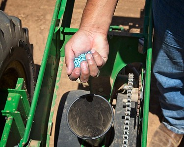 Planting a cotton seed treatment trial, 2017. We have to drop cotton seed  in the funnel every six inches the tractor goes down the field, so gloves are not really an option because one can't feel the seeds.