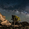 Cap Rock, Joshua Tree National Park