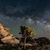 Cap Rock, Joshua Tree National Park