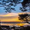 102  G Beach Sunset Tree