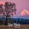 70  G Hood Alpenglow Trees