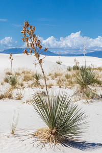 Leaning Yucca version 1