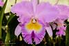 20190107-Savannah Botanical Garden-RM5_3223