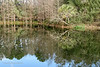 20190107-Savannah Botanical Garden-RM5_3214
