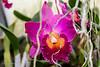 20190107-Savannah Botanical Garden-RM5_3220