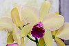 20190107-Savannah Botanical Garden-RM5_3224
