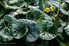20190107-Savannah Botanical Garden-RM5_3201