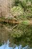 20190107-Savannah Botanical Garden-RM5_3212