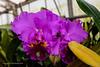 20190107-Savannah Botanical Garden-RM5_3225