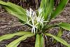 20190107-Savannah Botanical Garden-RM5_3202