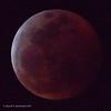 20190121-Blood Moon-3399