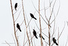 20190128-Birds in Fort Pierce-3581