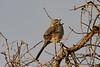 20190204-Birding at SNWR-RM5_4421