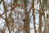 20190204-Birding at SNWR-RM5_4329