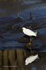 20190204-Birding at SNWR-RM5_4404